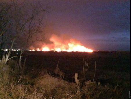 В Одесской области загорелись днестровские плавни (ФОТО, ВИДЕО)