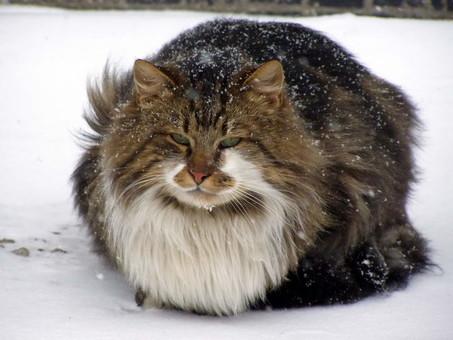 В Одессе ожидается настоящая зима со снегом