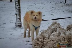 Одесса в первом зимнем снегу (ФОТОРЕПОРТАЖ)
