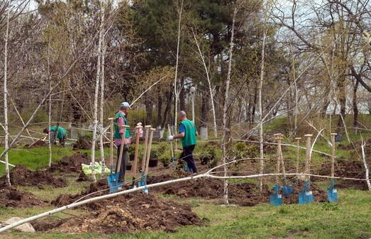В марте в Одессе начнут высаживать тысячи деревьев