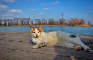 Речные котики на берегу Днестра