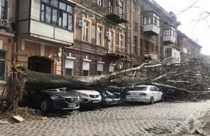 Ураганный ветер валит деревья в Одессе: погибла женщина (обновляется)