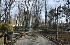 В Одессе рухнули уже полторы сотни деревьев