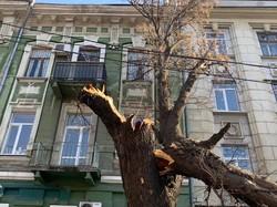 В Одессе рухнули уже 400 деревьев