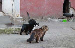 Одесская мэрия взялась за котиков