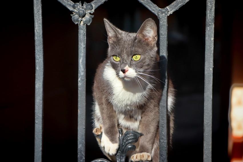 Мартовские коты смотреть онлайн