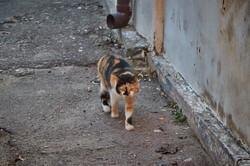 Мартовские коты в Одессе в первый день весны (ФОТО)