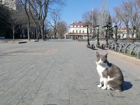 Режим карантина в Одессе может быть продлен еще на две недели