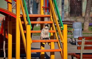 В Одессе ужесточают режим карантина: пожилым надо сидеть дома, всем остальным - в масках и по одному-двое