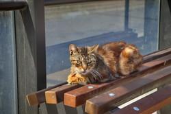 Весенняя Одесса: коты и цветы (ФОТО)