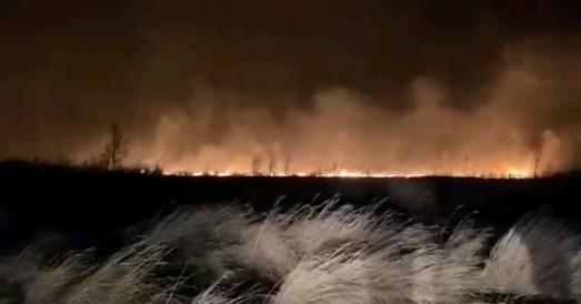 Россия горит не только от коронавируса: лесные пожары вернулись с небывалым размахом