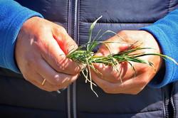 На юге Одесской области будет большой неурожай: засуха уничтожает поля (ФОТО, ВИДЕО)