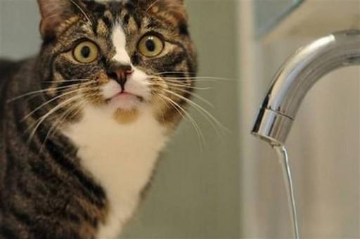 В Одессе запущен сервис онлайн-платежей за услуги водопровода
