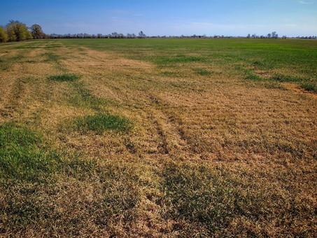 Засуха: уже погибла почти половина урожая озимых, в Одесскую область едет правительственная комиссия