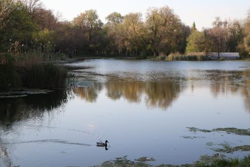 Дюковский парк обещают благоустроить
