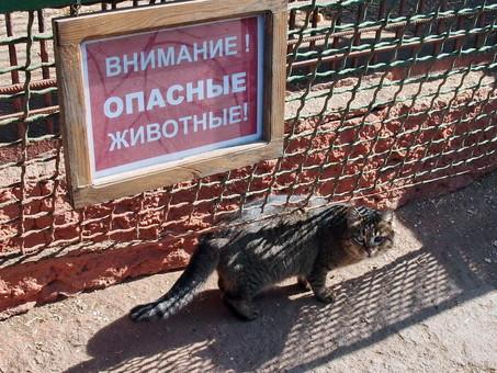 В Одессе открывают зоопарк после карантина