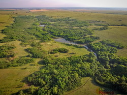 Как в Одесской области степной заповедник заселяют дикими животными (ФОТО, ВИДЕО)