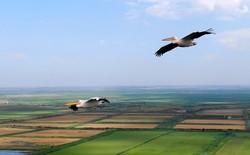 Полет с розовыми пеликанами над дельтой Дуная (ФОТО, ВИДЕО)