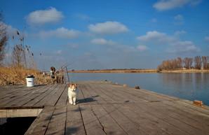 Наводнения в Карпатах привели к началу паводка в Одесской области на Днестре