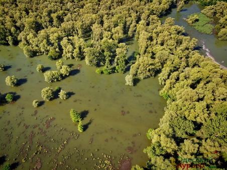 На Днестре вода продолжает подниматься: пик наводнения обещают сегодня и завтра