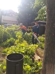 Ураган над Одессой: рухнуло 111 деревьев