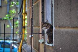 Одесские коты и кошки отмечают свой международный праздник (ФОТО)