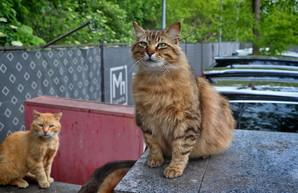 Одесские коты и кошки в свой международный праздник (ФОТО)