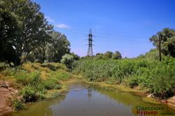 Как хотят спасать придунайское озеро Котлабух в Одесской области (ФОТО)