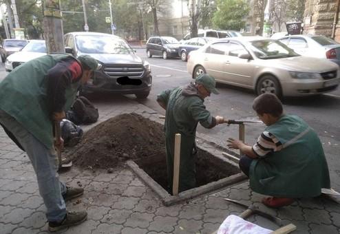 В центре Одессы готовят высадку деревьев