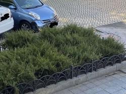 В Одессе взялись засаживать вечнозелеными кустарниками улицу Пушкинскую