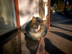 Осенние котики в Одессе (ФОТО)