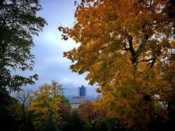 Осенний листопад в Одессе (ФОТО)