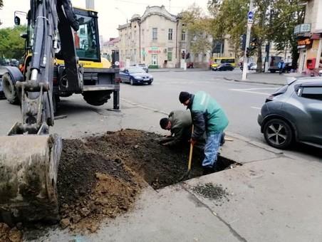 В Одессе на Молдаванке высаживают новые деревья