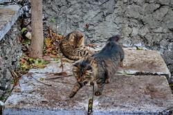 Зимнее море в Одессе: шторм, волны и коты (ФОТО, ВИДЕО)