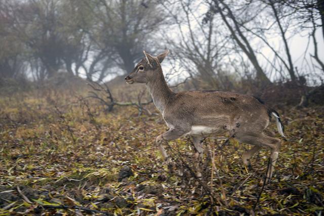 Благородные олени и лани поселились на дунайском острове Ермаков