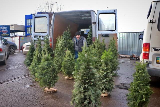 Где в Одессе будут собирать новогодние елки