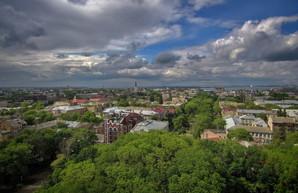 """В Одессе создали специальную """"горячую линию"""" для сообщений об уничтожении деревьев"""