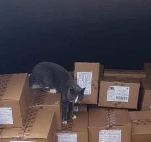 Курьез: кошка уехала из Одессы в Израиль в контейнере с конфетами