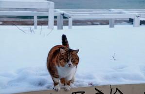 Одесские коты у моря в морозы (ФОТО)