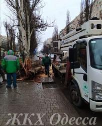 Непогода привела к падению в Одессе нескольких деревьев