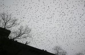 Над Одессой кружат многотысячные стаи птиц (ВИДЕО)