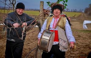 Главный фестиваль Болграда пройдет в сокращенном режиме