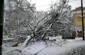 В Одесской области из-за обледенения оставались без света почти 170 населенных пунктов