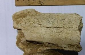 В Одесской области нашли кости древнего животного