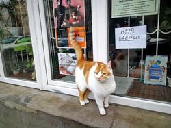 В Одессе отмечают международный день кота (ФОТО)