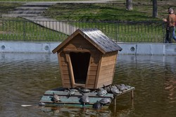 В Одессе выпустили в пруды парка Победы черепах и лебедя