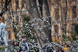 В Одессе включили первые фонтаны (ФОТО, ВИДЕО)