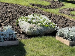 В Одессе высаживают цветы и благоустраивают клумбы