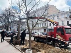 В Одессе сажают Адамовы деревья