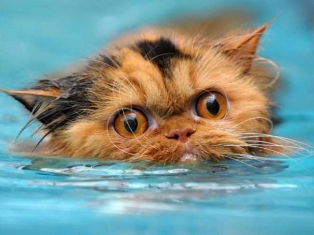 Ласа кішка до риби, та в воду лізти не хоче…
